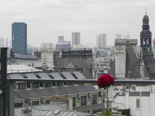 Red Rose in Paris