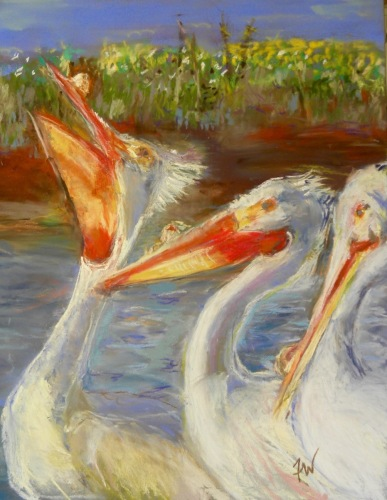 Courting Pelican 2