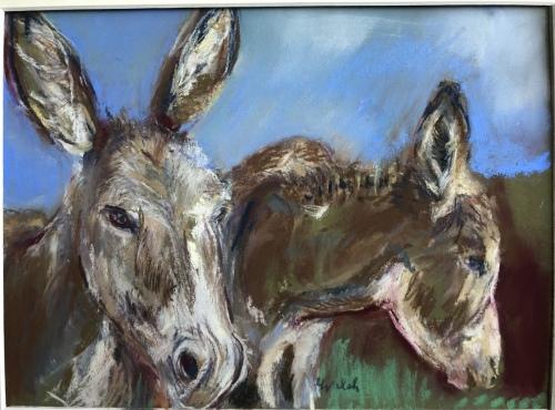 Wild burros. Reche Canyon