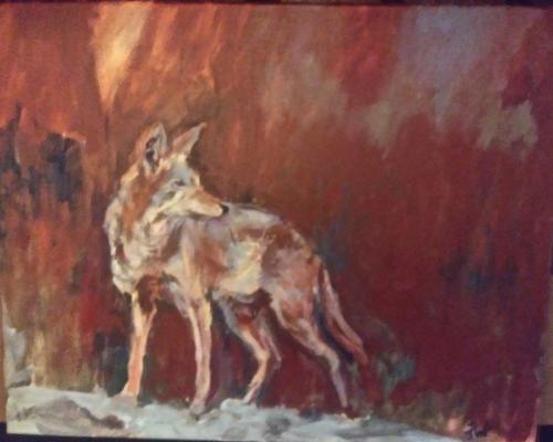 Coyote SC