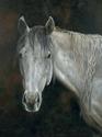 Sassy - Original oil on Canvas (thumbnail)