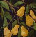 Golden Pears (thumbnail)