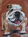 MAX the Bulldog (thumbnail)