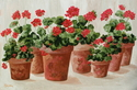 Potted Geraniums (thumbnail)