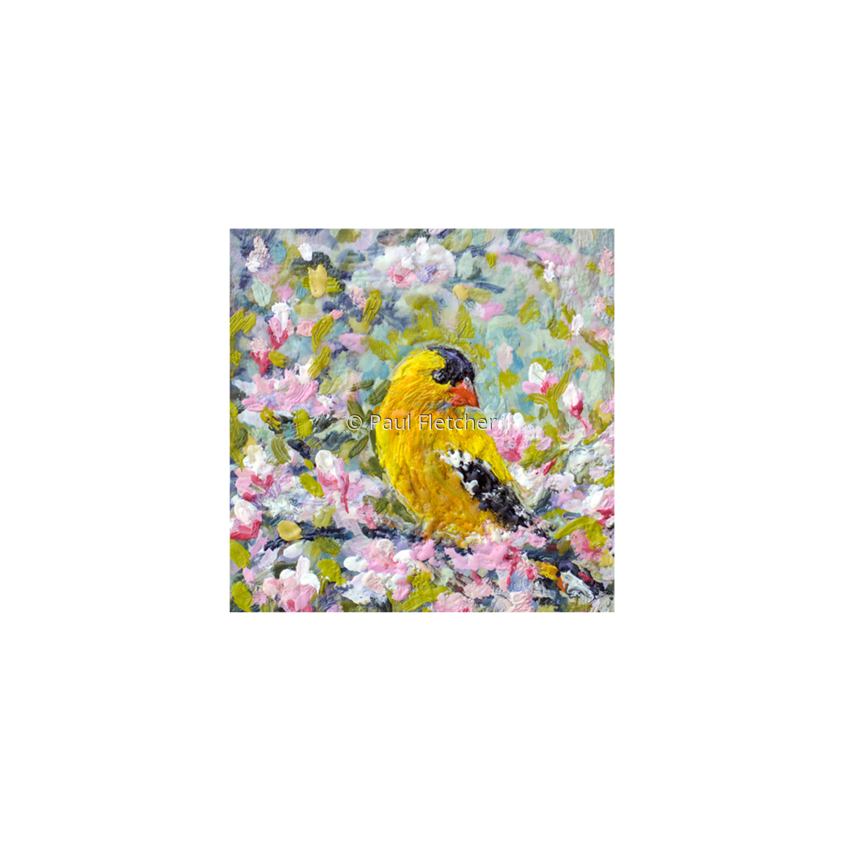 Spring Goldfinch ~ 5X5 (large view)
