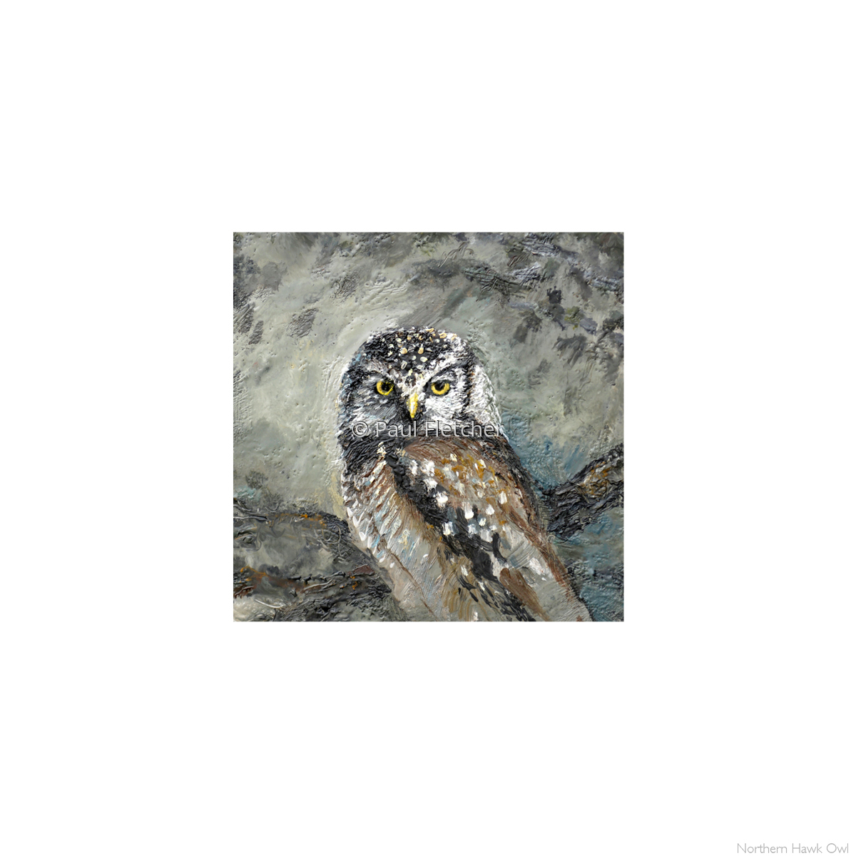 N.A. Hawk Owl ~ 5X5 (large view)