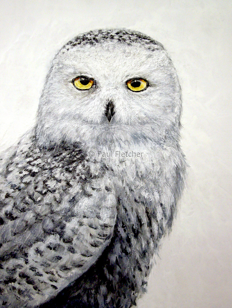 Snowy  ~ Snowy Owl (large view)