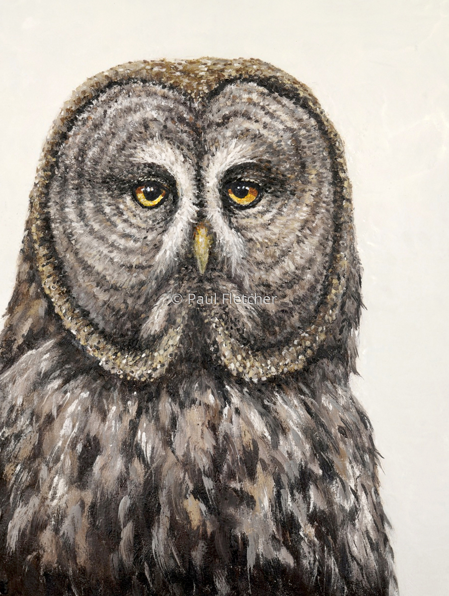 Great Grey ~ Great Grey Owl (large view)