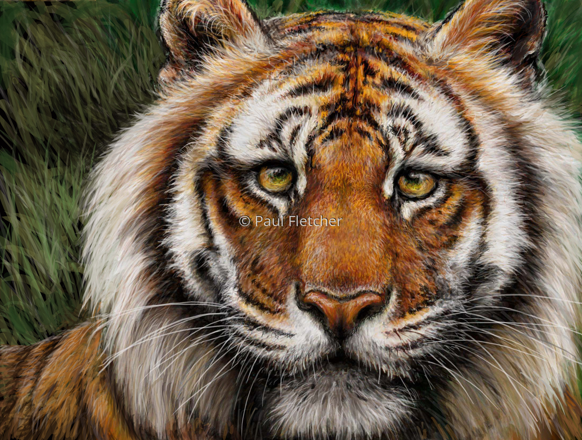 Tiger (large view)
