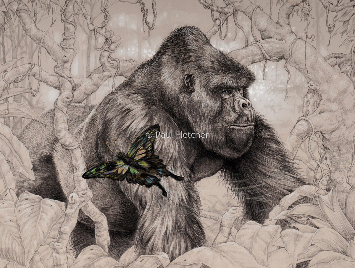 Gorilla ~ Beauty and the Beast (large view)