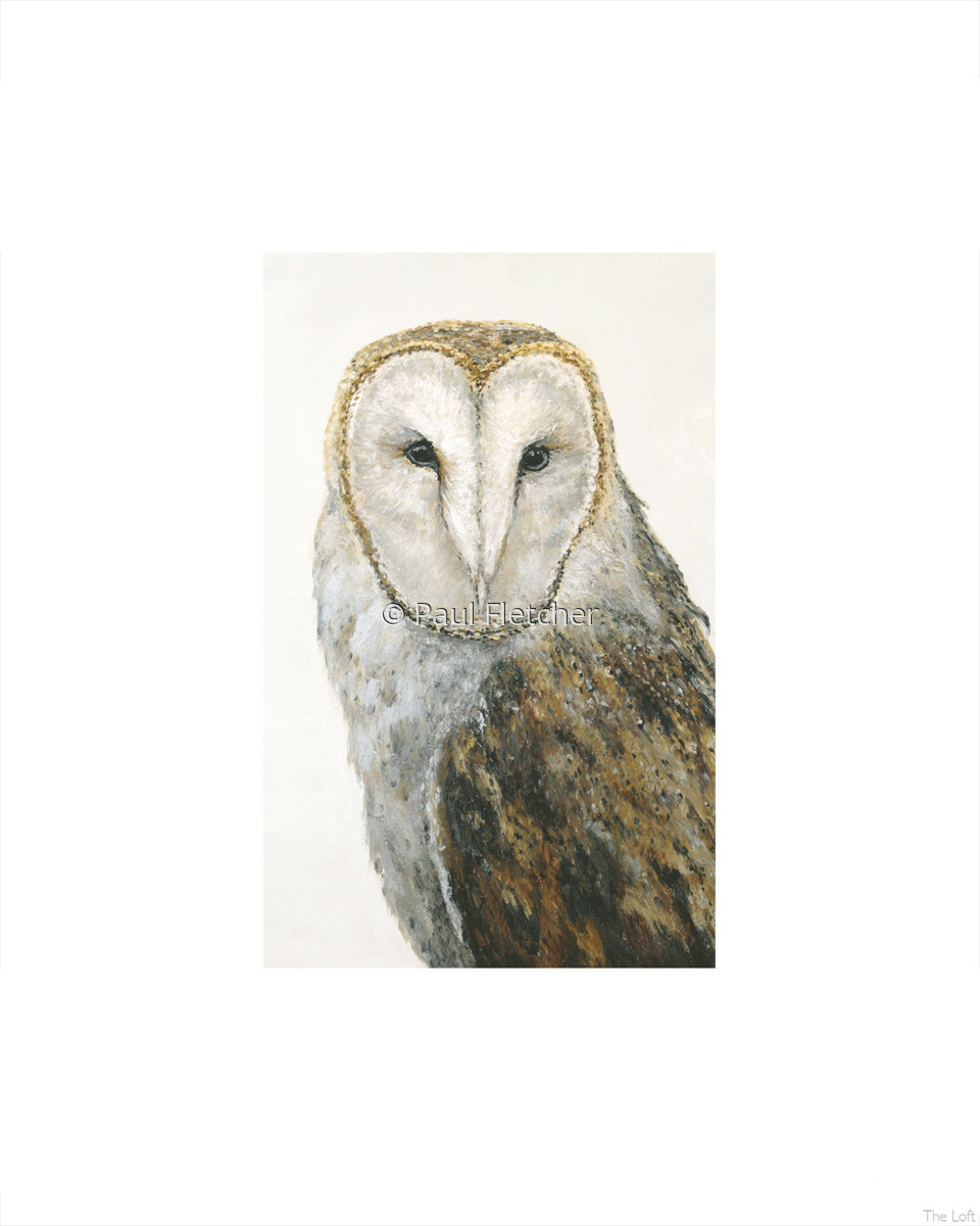 Barn Owl ~ 5X7 ~ 8X10 ~ 11X14 (large view)