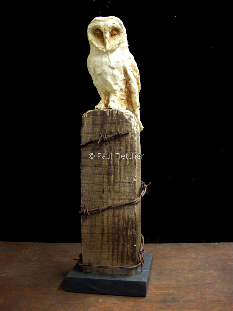 Posted ~ Barn Owl (large view)