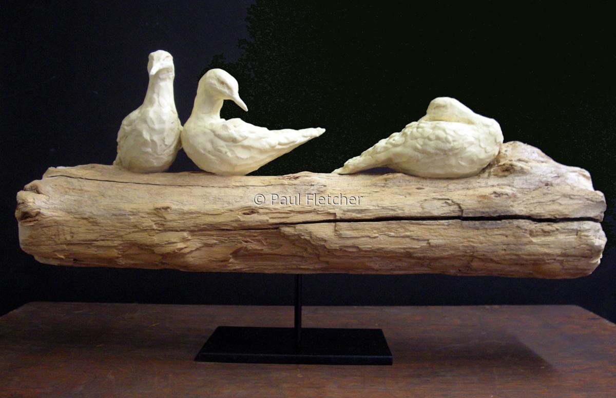 Shore Birds (large view)