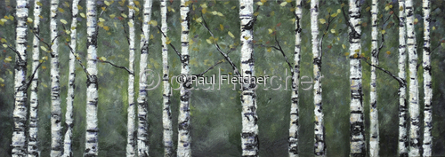 birch woods (large view)
