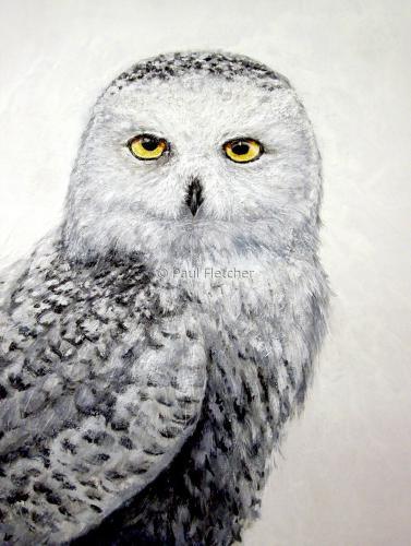 Snowy  ~ Snowy Owl