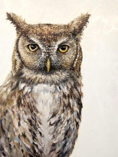 Screech ~ Screech Owl (large view)