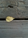 First Leaf of Fall (thumbnail)
