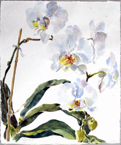 phalenopsis flower watercolor (large view)