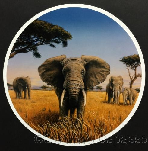 Elephants by Gennaro Capasso