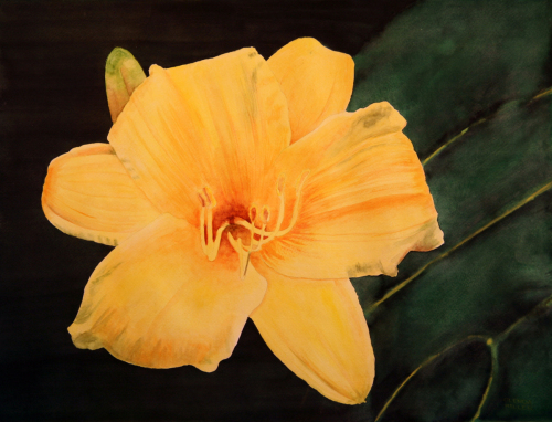 Yellow Day Lily by Glenda Miller