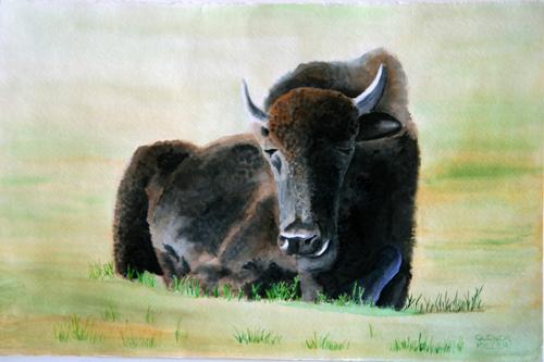 Sitting Buffalo