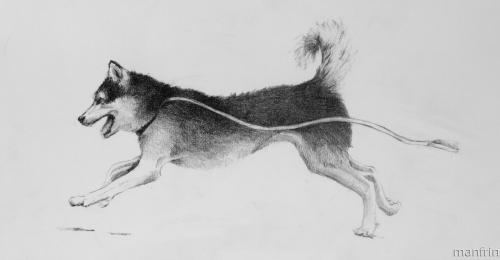 Tika Running