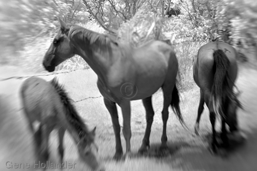 Horses I, Easter Island (large view)