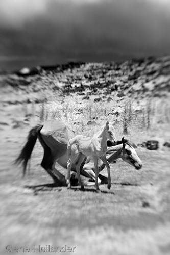 Horses V, Easter Island (large view)
