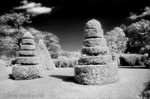Longwood Topiary No. 1 (large view)