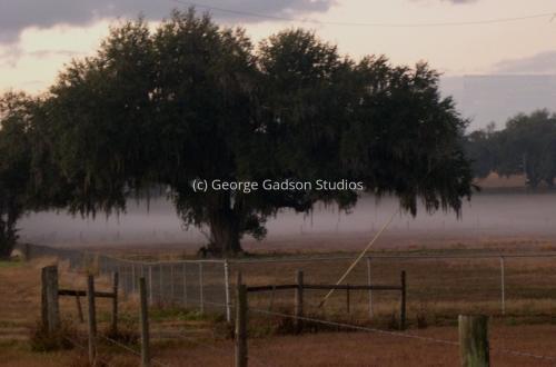 """""""Oak Tree in Fog"""""""