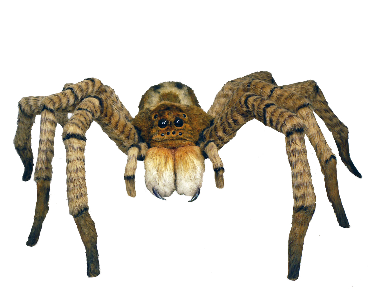 wolf spider (large view)