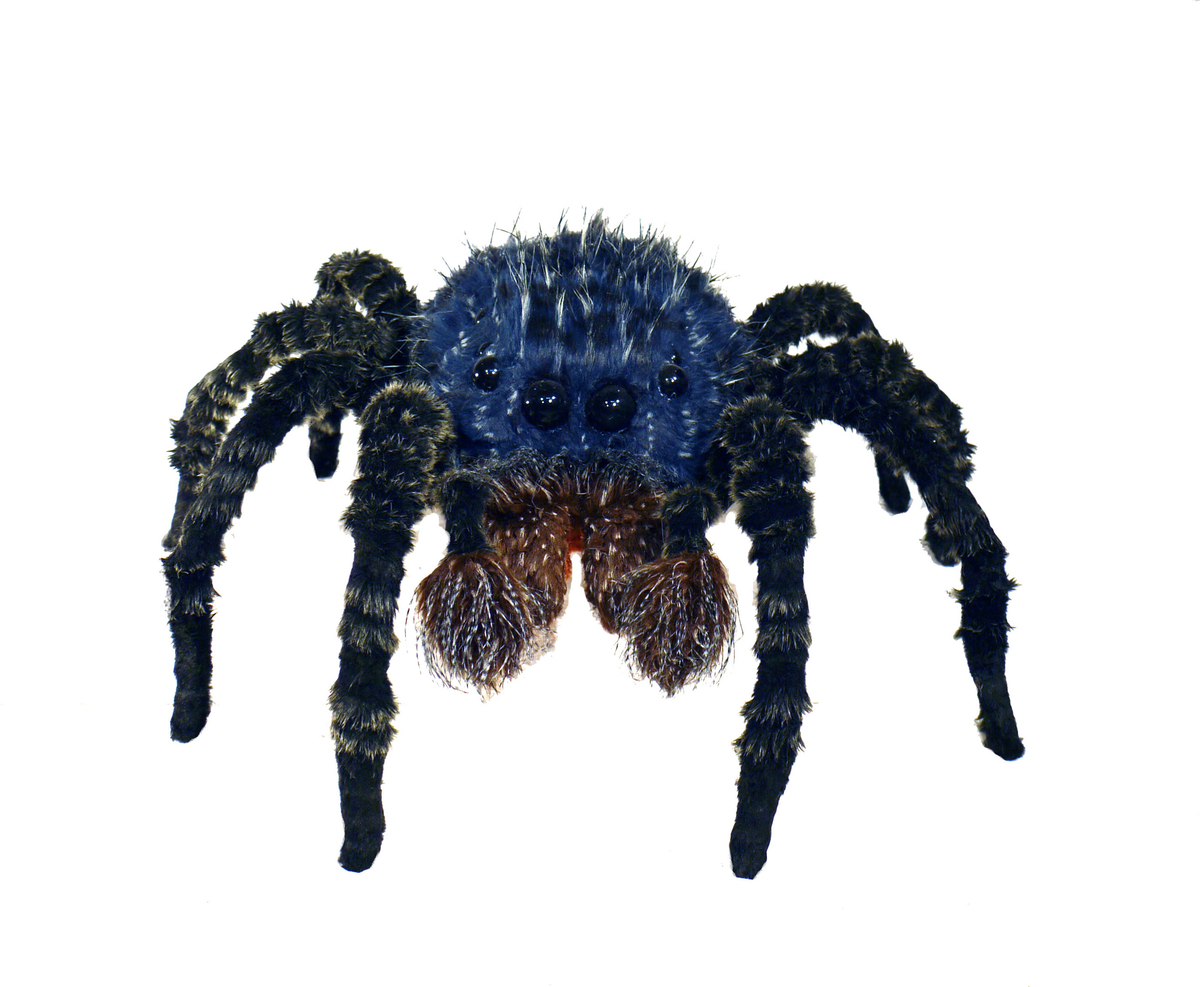 Blue jumping spider (large view)