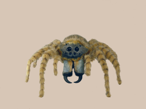 jumping-wolf spider
