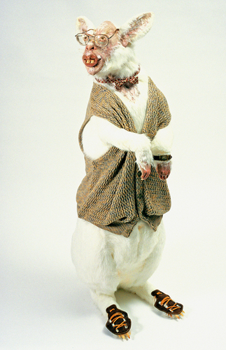 Wight rabbit (large view)