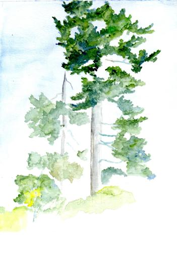 2569-018 Trees by the Grange