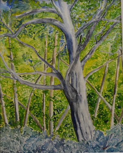 2569-032 Old Tree