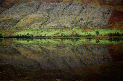 Reflections, Loch Fyne by Gillian Horgan