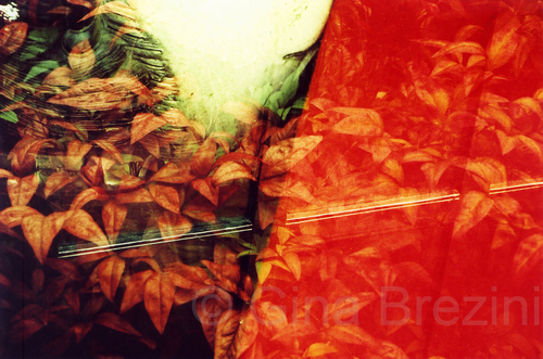 Leaves and Lips by Gina Brezini
