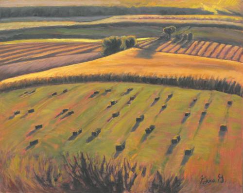 Fields Aglow