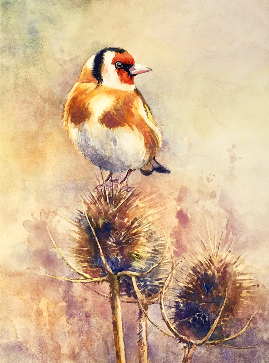 GOLDFINCH ON A THISTLE (large view)