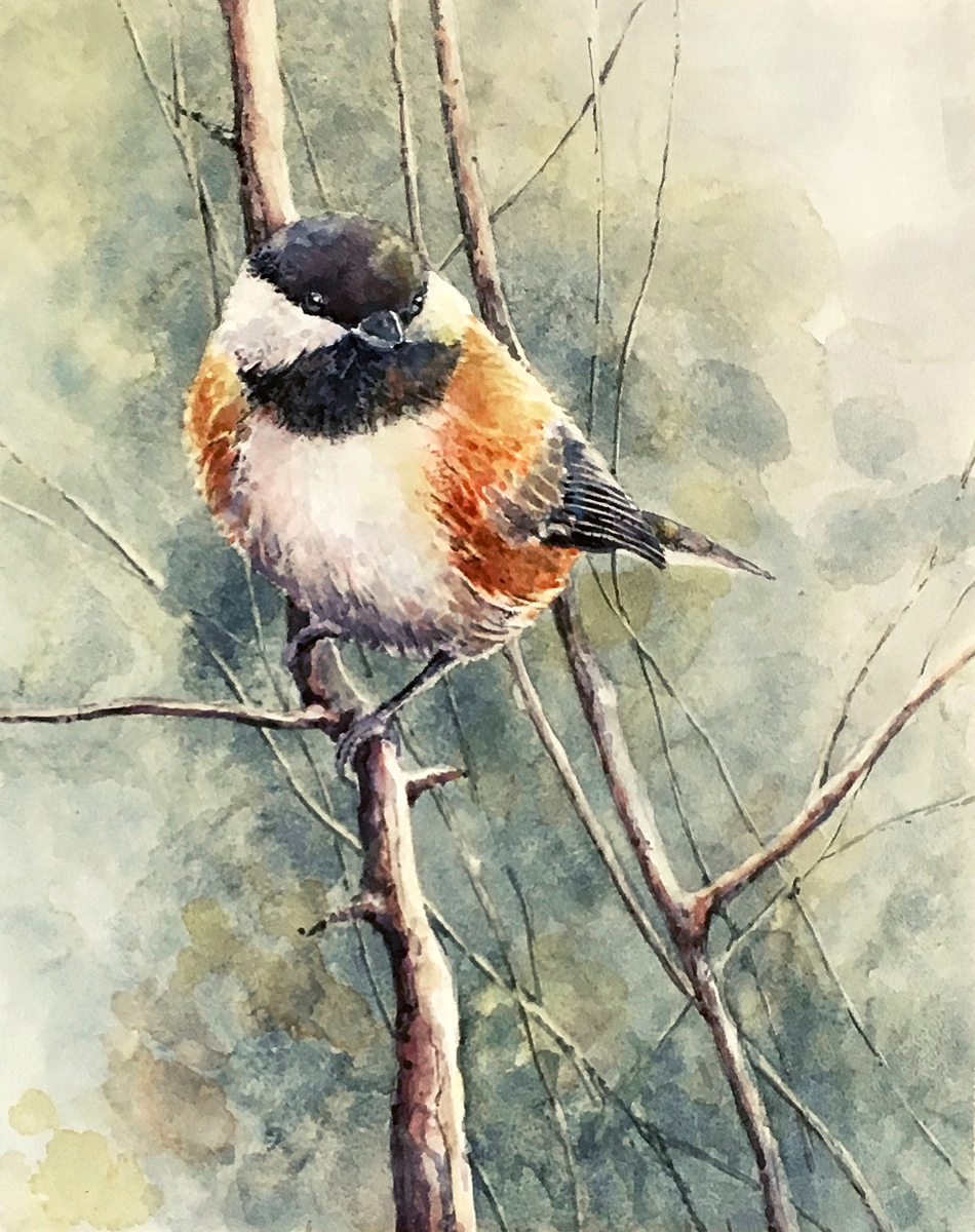 CHESTNUT BACKED CHICKADEE (large view)