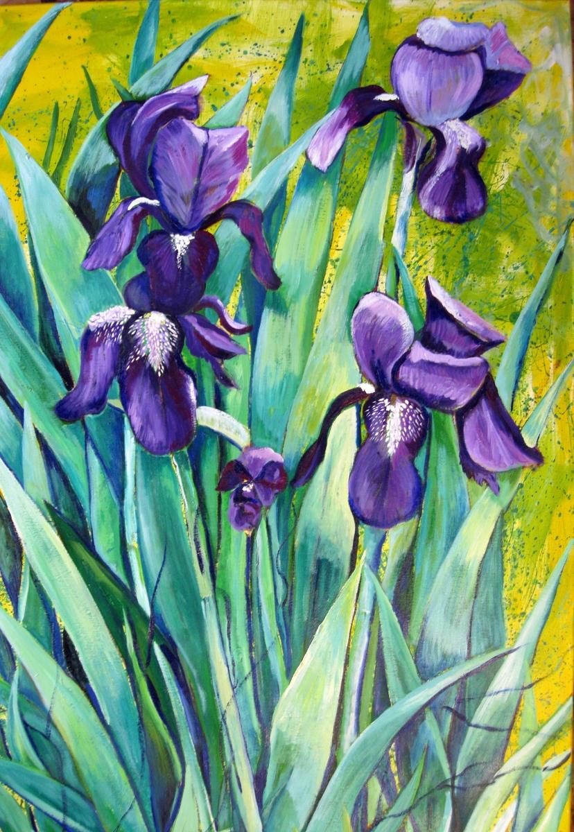 Spring Iris #1 (large view)