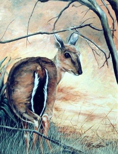 Bushbaby in bushfire
