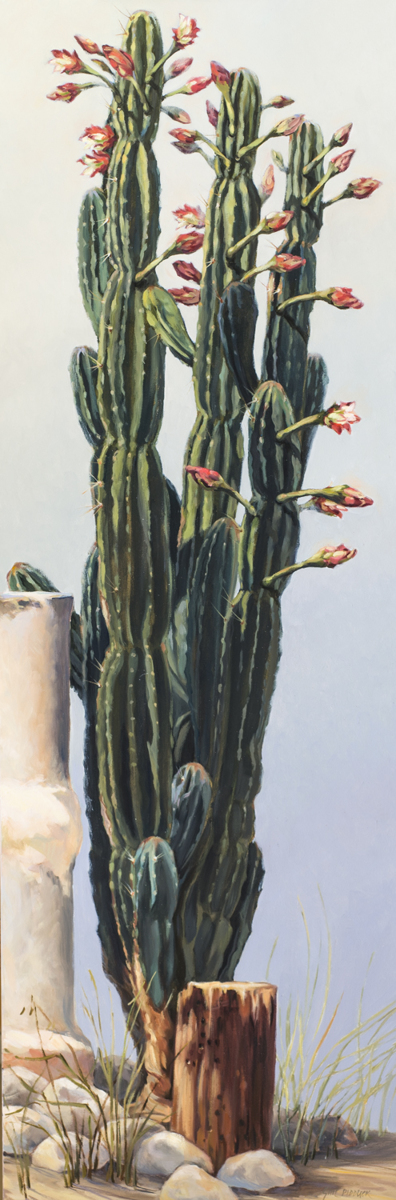 Cacti Bardsdale (large view)