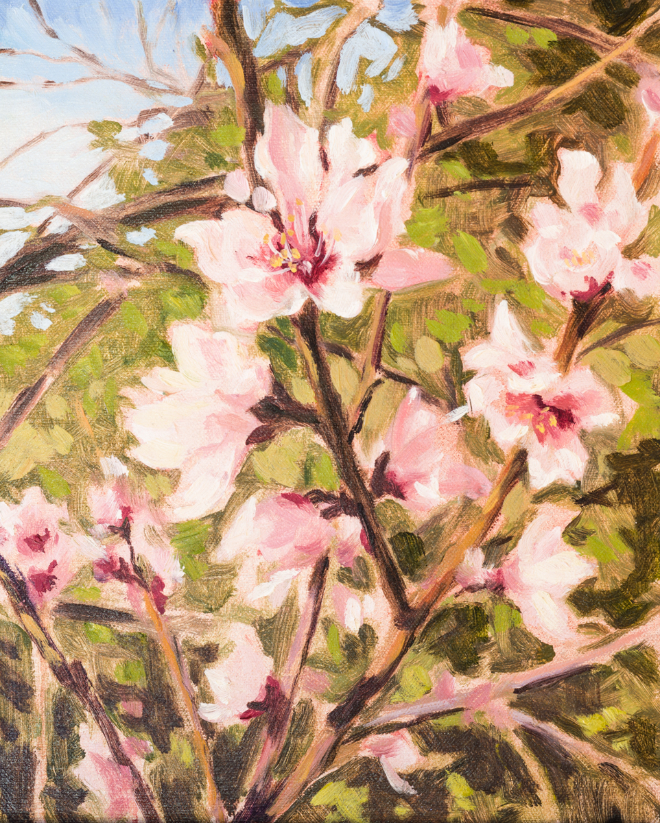 Peach Blossoms (large view)