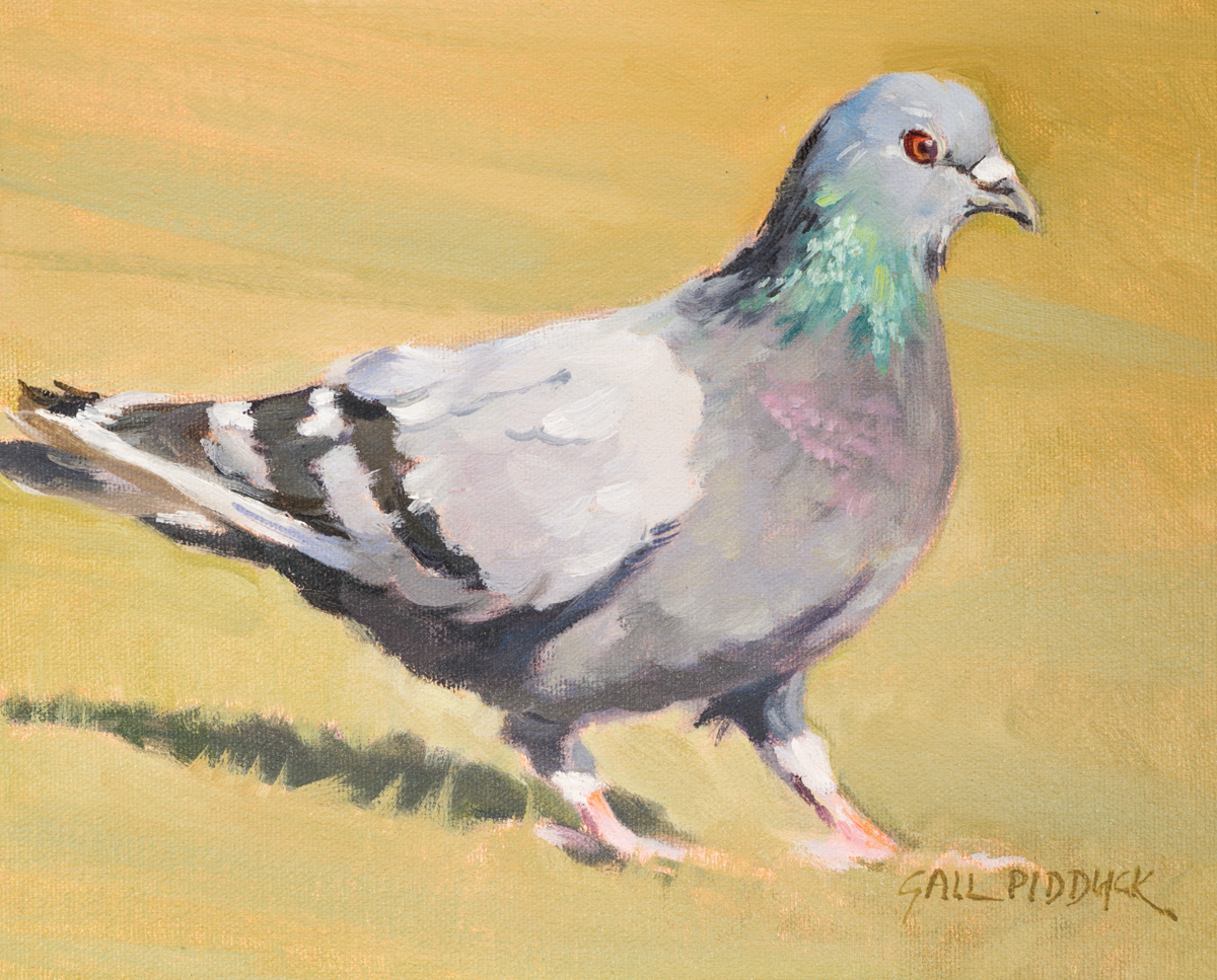 Pigeon (large view)