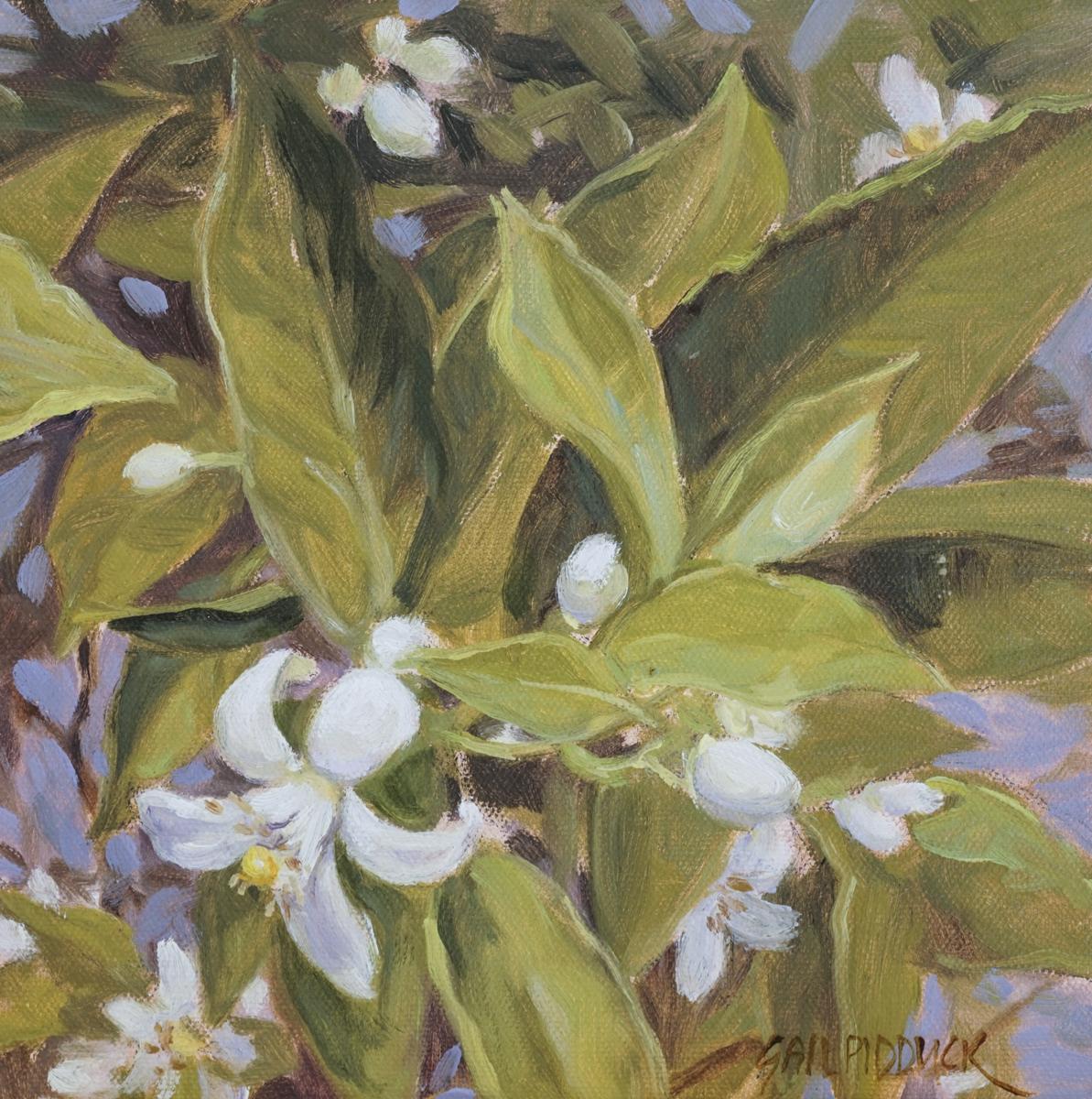 Citrus Blossoms (large view)
