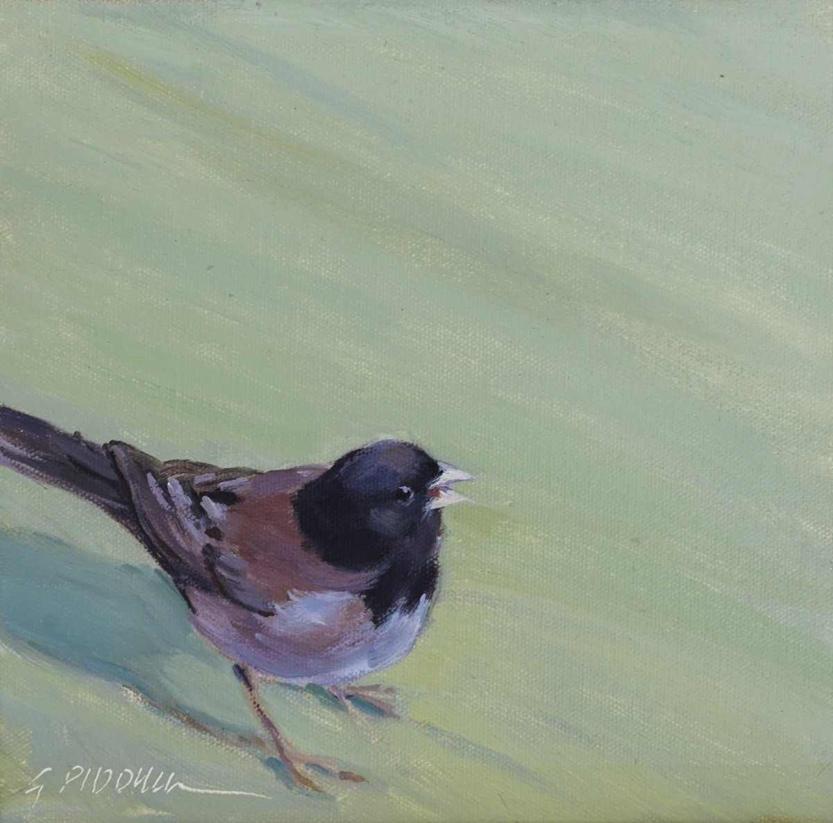 Junco (large view)