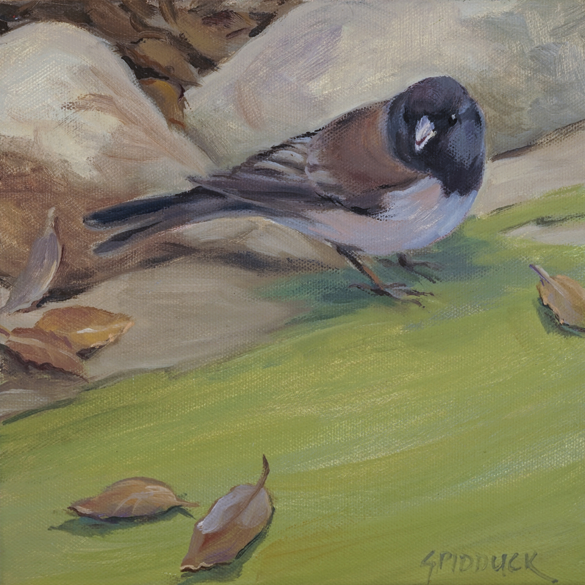 Junco and Oak Leaves (large view)