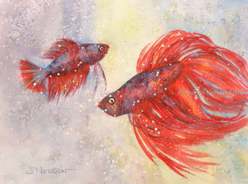 Siamese Fighting Fish by Sharon Nelson-Bianco